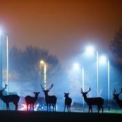 Protéger la nuit, un enjeu pour la nature
