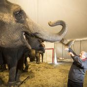 Gilbert Gruss : «Interdire les animaux exotiques, c'est la mort de notre métier !»