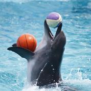 Pour réussir votre carrière, inspirez-vous d'un dauphin