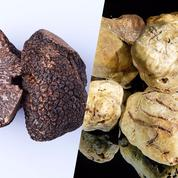 Truffe noire vs truffe blanche d'Alba : les diamants du terroir