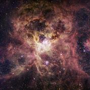 Un excès d'étoiles massives intrigant dans la Nébuleuse de la Tarentule