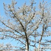 Faut-il faire analyser son sol quand des arbres meurent ?