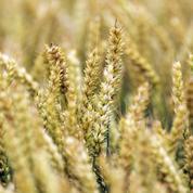 Ciblé par des militants anti-OGM, Limagrain menace de délocaliser sa R&D