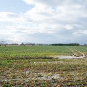 Dans l'Allier, l'achat de 900 hectares de terres par un Chinois fait grincer des dents