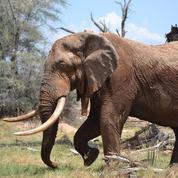 Ces mammifères qui renoncent à la vie sauvage