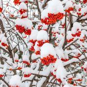Neige au jardin: les bienfaits de la «liquide étincelle»