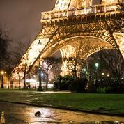Comment les rats empoisonnent la vie des Parisiens
