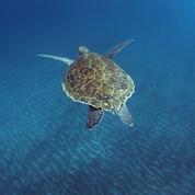 En haute mer, les animaux préfèrent la ligne droite