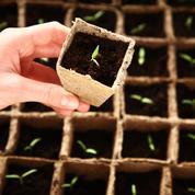 Tomates, concombres: semez-les «à chaud»