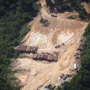 La France épinglée pour l'importation de bois illégal en provenance d'Amazonie