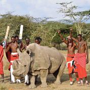 La mort du dernier rhinocéros blanc mâle du Nord condamne l'espèce à l'extinction