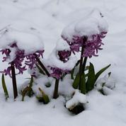Plusieurs départements en risque important neige