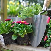 Parterres fleuris: diviser pour mieux faire pousser