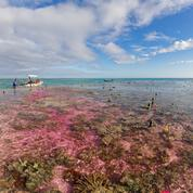 Les coraux sensibles à l'acidification des océans