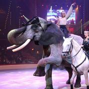 André-Joseph Bouglione rugit contre la maltraitance des bêtes de cirque