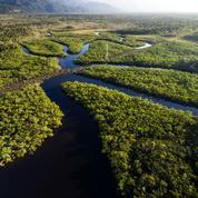 Des civilisations oubliées peuplaient l'Amazonie au Moyen-Âge