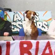 Guevara, l'hilarant chien twittos de «la commune libre de Tolbiac»