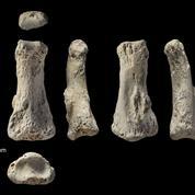 Découverte du plus vieil os humain hors d'Afrique