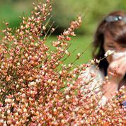 Allergies: vers un abaissement du remboursement des désensibilisations ?