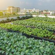 L'agriculture urbaine prend racine
