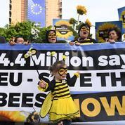L'Europe vote l'interdiction de trois pesticides tueurs d'abeilles