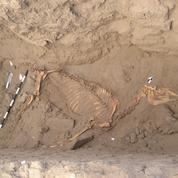 L'énigme d'un cheval vieux de 3000 ans enterré comme un homme au Soudan