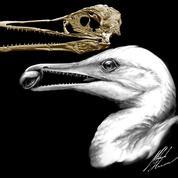 Quand les oiseaux avaient encore des dents