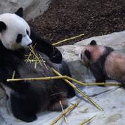 Le zoo de Beauval victime d'un cambriolage