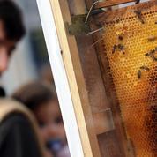 Après la mort de 2 millions de ses abeilles, un apiculteur alerte et mobilise
