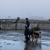 À Cannes, les chiens de Dogman reçoivent un prix d'interprétation canine, la Palm Dog