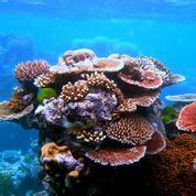 «L'homme doit vivre au cœur des écosystèmes, et non de leurs décombres !»