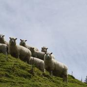 Les agriculteurs s'inquiètent du rapprochement entre l'UE et l'Océanie