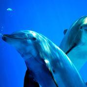 On sait mesurer le degré de bonheur d'un dauphin
