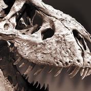 «Le T. rex est plus proche du canari que du crocodile»