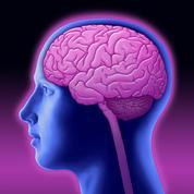 Cerveau, QI : quelles différences entre les hommes et les femmes ?