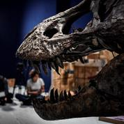 Découvrez Trix, le squelette exceptionnel de T. rex exposé à Paris, en vidéo
