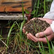Colère et indignation des apiculteurs, mobilisés contre la disparition des abeilles
