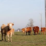 La médecine douce séduit les éleveurs