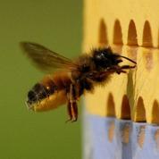 Les agriculteurs peuvent louer des abeilles pour polliniser les vergers
