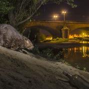Comme les dinosaures, l'homme pousse les mammifères à vivre la nuit