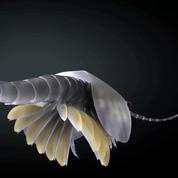 Découvrez en 3D l'étrange ancêtre des crustacés, mi-insecte, mi-crevette