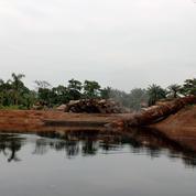Exploitation illégale de bois en RDC : la France épinglée par une ONG