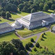 À Londres, l'orgueil retrouvé de Kew Garden