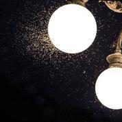 L'éclairage accélère-t-il le déclin des insectes ?