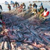 Selon l'ONU, la surpêche menace l'avenir de la mer