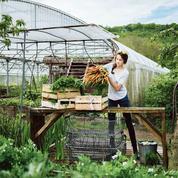 La lutte biologique tente de prendre le relais des pesticides chimiques