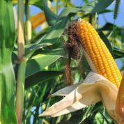 Toute modification génétique crée un OGM