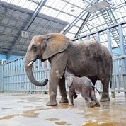 Le ZooParc de Beauval chauffé par ses animaux