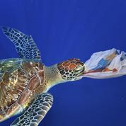 Biodiversité : l'Europe peine à protéger les espèces en danger