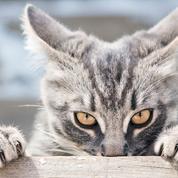 Rencontres pour les amoureux des chats au Royaume-Uni